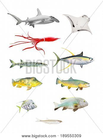 Sea life great set. Hammerhead shark, Manta Ray, Squid, Barracuda, Yellow Fin Tuna, Bass Fish, Salmon, Grouper and Sardine isolated on white background.