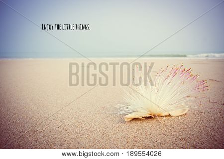 Motivational and inspirational quote on Barringtonia asiatica on the beach with vintage and oldie color grading