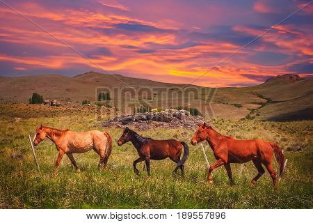 Three horses on a meadow in argentinian Patagonia