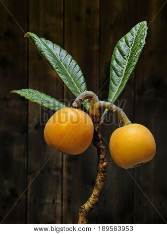 Medlars produced with organic cultivation photographed on antique wood background