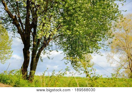 Tree in a summer Park on a Sunny day. A view of the trees and the lawned hilly terrain.