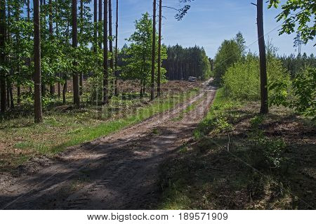 The photo shows a forest, unpaved road. It runs through a mixed forest. It is sunny day.