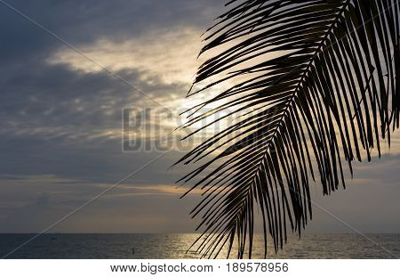 Palm frond on the beach at sunrise