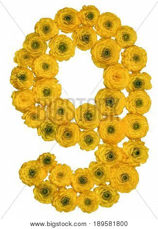 Arabic Numeral 9, Nine, From Yellow Flowers Of Buttercup, Isolated On White Background