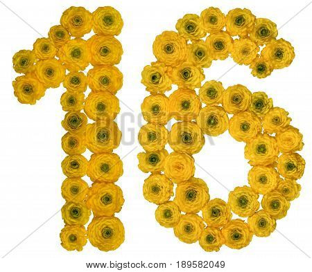 Arabic Numeral 16, Sixteen,  From Yellow Flowers Of Buttercup, Isolated On White Background