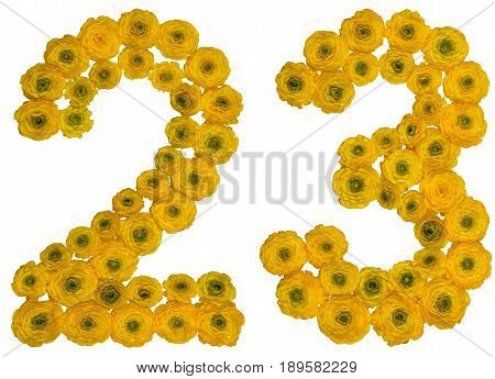 Arabic Numeral 23, Twenty Three, From Yellow Flowers Of Buttercup, Isolated On White Background