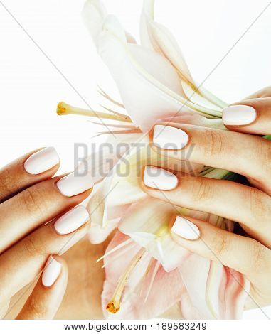 beauty delicate hands with manicure holding flower lily close up isolated on white, spa concept macro