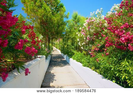 Beautiful classical Greek hotel road pathway to sea beach for tourists among red white rose colorful red rose white flowers and green palms walls. Greece islands holidays tours. Greece Crete island