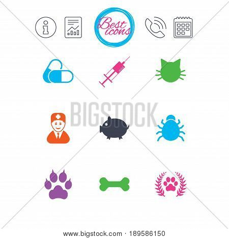Information, report and calendar signs. Veterinary, pets icons. Paw, syringe and bone signs. Pills, cat and doctor symbols. Classic simple flat web icons. Vector