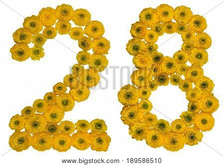 Arabic Numeral 28, Twenty Eight, From Yellow Flowers Of Buttercup, Isolated On White Background