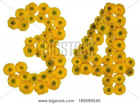 Arabic Numeral 34, Thirty Four, From Yellow Flowers Of Buttercup, Isolated On White Background