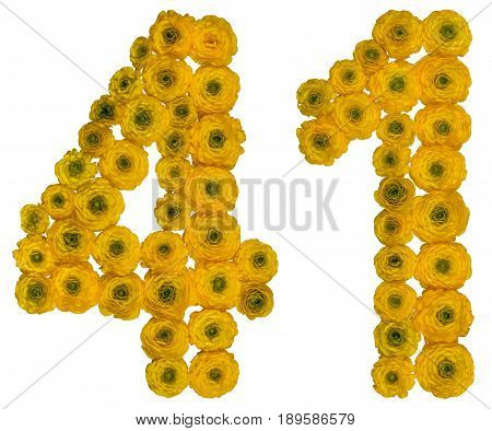 Arabic Numeral 41, Forty One, From Yellow Flowers Of Buttercup, Isolated On White Background