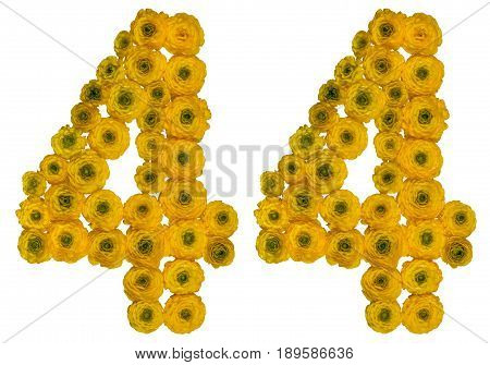 Arabic Numeral 44, Forty Four, From Yellow Flowers Of Buttercup, Isolated On White Background
