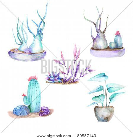 Cactus and houseplant isolated on white background. Watercolor hand drawn set illustration