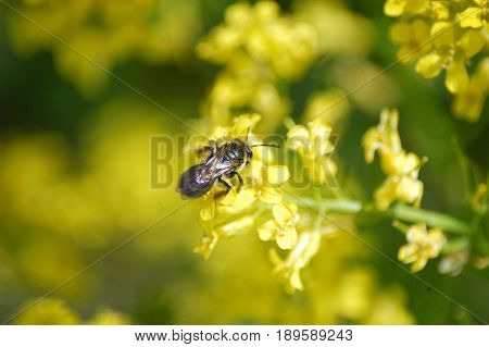 bee flower pollen yellow green  spring summer