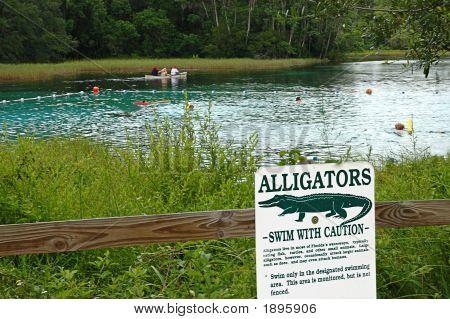 Swim With Gators