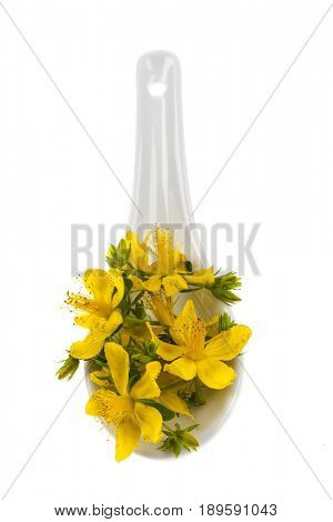 Fresh yellow flowers of medicinal plant St. John's Wort in porcelain spoon, isolated on white background