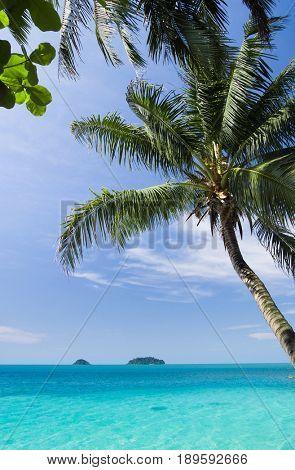 Green View Coconut Getaway