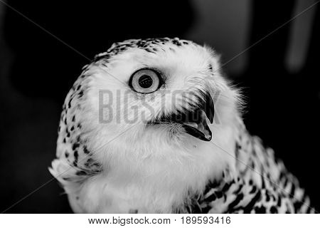 owl night bird in the forest black and white