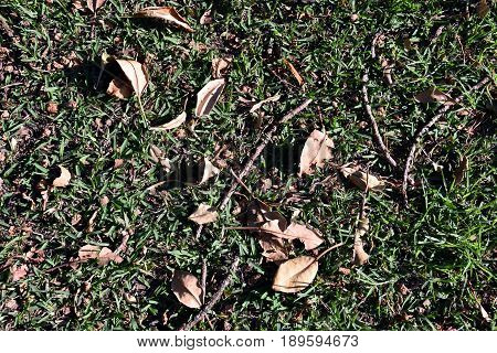 Dry autumn leaves background with lawn grass. Leaves autumn background. Close up on Autumn Leaves.