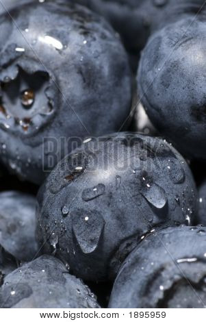 Plump Blueberries