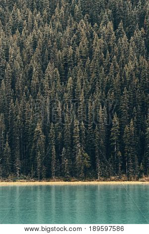 Forest at lake waterfront in Banff National Park, Canada.