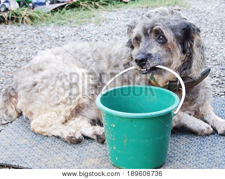 Poor dog lay down on the floor with a donation cup