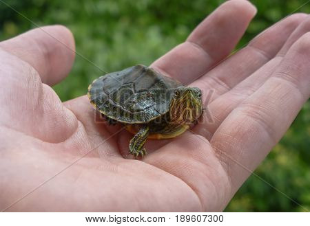 Small turtle on a hand with leaves on the background