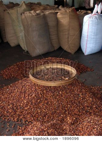 Granos de cacao en Indonesiah
