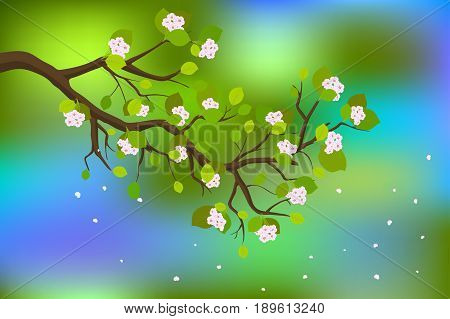 Blooming branch of japanese cherry, vector illustration