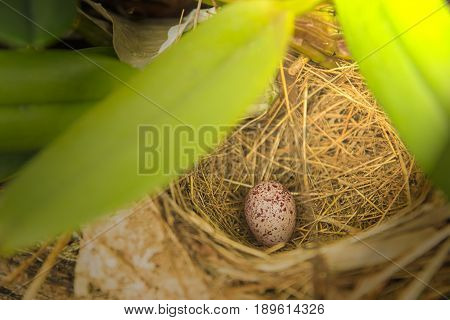 Bird's nest and eggs in the forest