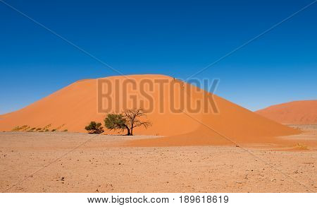 Dune 45 Sossusvlei Namib-Naukluft National Park Namibia