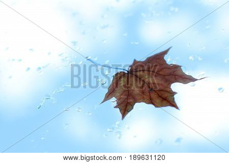 One blurry old maple leaf clinging to the window after the rain against the blue sky/ autumn has arrived