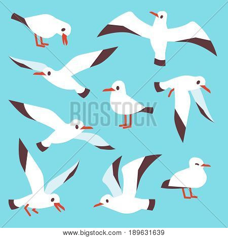 Cartoon atlantic seabird, seagulls flying in blue sky vector set. Sea gull drawing flight in various detail illustration