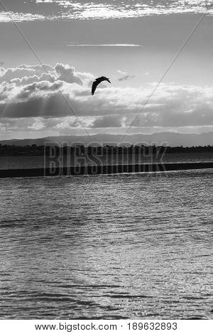 Pristine Beach At Wellington Point, Brisbane. Black And White.