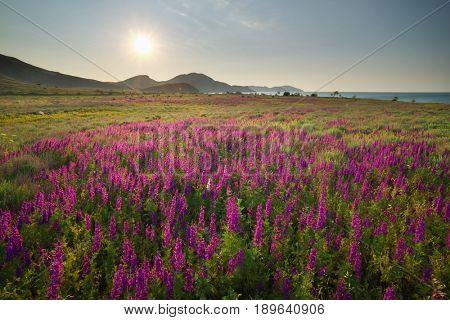 Beautiful nature landscape. Composition of nature.