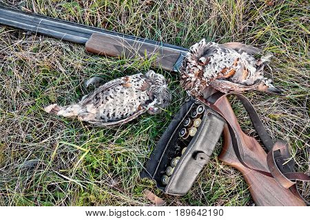 Grouse And Rifle On Grass