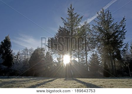 Sunray Trough Forest