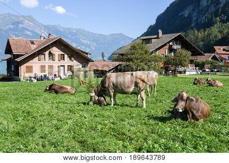 Rural Scenery Of Iseltwald In Jungfrau Region On Switzerland