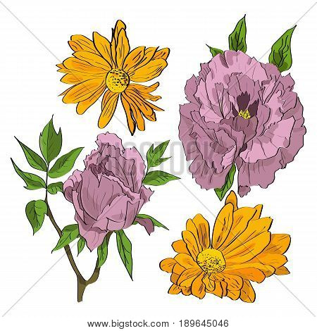 Vector Set Of Hand Drawn Rosy Peonies And Yellow Chrysanthemum Flowers In A Sketch Style.