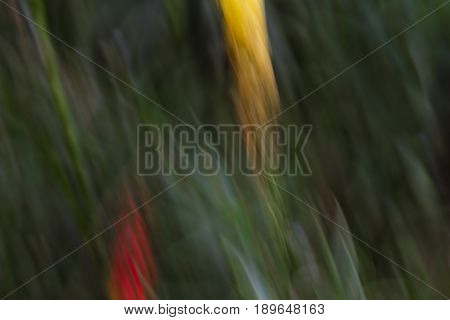 Abstraction using yellow and red flowers and movement