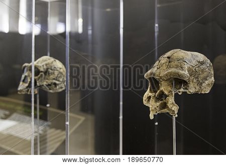 Prehistoric Human Skulls