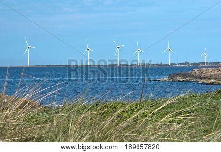 Seaside wind power turbines blue ocean and green grass on a heath landscape in Halland Sweden.