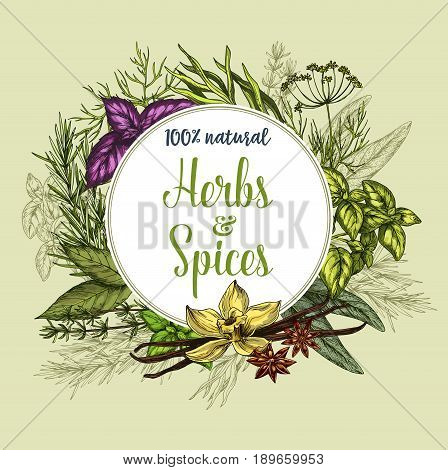Herbs and spices poster. Natural fresh organic seasonings of thyme, basil or oregano and ginger or spicy chili pepper. Farm grown peppermint or arugula and rosemary or bay leaf for organic market