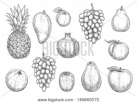 Exotic fruits and farm grown harvest sketch icons. Vector isolated symbols of tropical pineapple, grape or apple and pear, orange or tangerine and mango or papaya with juicy plum