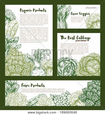 Cabbage and leafy vegetables posters and banners of white or red cabbage, cauliflower or broccoli and brussels sprouts, chinese napa and romanesco or kohlrabi and pak choi kale veggies for farm market