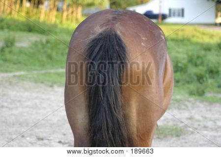 Backend Of Horse