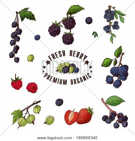 Hand drawn illustration of currant, razz, blueberry, stawberry, gooseberry, blackberry, elderberry, huckleberry Set og fruits Colorful sketches elements