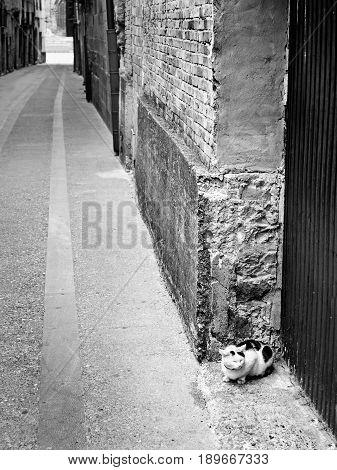 City street cat detail of an animal in freedom pet feline