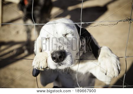 Dog Abandoned Behind Bars